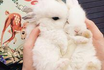 토끼 rabbit