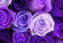 Purple / All purple