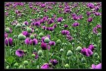 lieblingspflanzen / by waldfee aleana