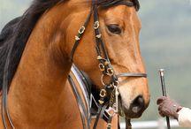 """MI HOBBY """"LOS CABALLOS"""" / Mi pasión por los caballos y mis años de amazona,"""