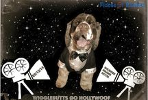 Wigglebutts Go Hollywoof / by Fidose of Reality