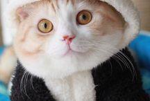 cute animals / diy_crafts