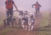 Sled Dog Events