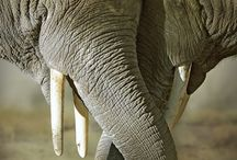 Nature Photography Elephant
