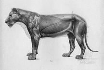 Animal Anatomy / Anatomy / by Scott Denton