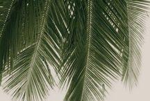 LTCO // Feeling Tropical / Tropical Vibes