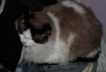 Gatos / Gatitos