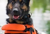 Salute To : Search and Rescue / by Jeni Morgan