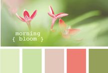Color palettes for decoration