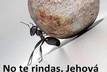 jw espanhol