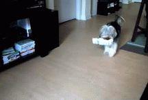 Dog gifs