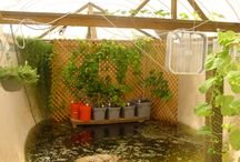 AQUAPONICS / by The Sustainable Life