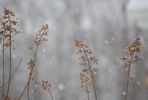 Gräser Deko / sarah mia sammelt Ideen zur Deco für das bezaubernde sarah mia Atelier.