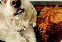 Sjonnie / My best friend!