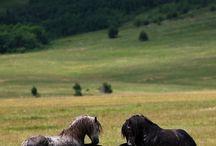 Horses / by Janie Cumming