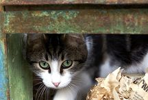 Feline Friends / Everything for cat and kitten owners and lovers!