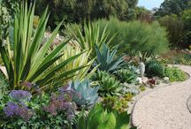 Water-Conscious Landscapes / When creating a landscape design in the desert, it is important to think about incorporating water-saving features that allow plants to grow without using too much of this valuable resource.