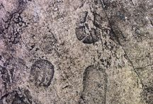 FóssilUrbano /  Paleontologia e Arqueologia no futuro? Fotos Argojunior