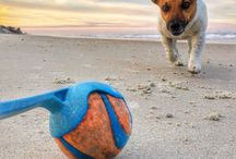 Paw prints in the sand / If your idea of a fun vacation is one that includes the family pet, look no further than New Smyrna Beach!