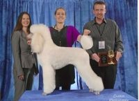 """Award Winning Dog Grooming Competitions and Dog Groomers, Naperville / """"Voted Napervilles Best"""" Proudly Ranked in the Top Ten in Groom Team USA"""
