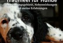 Homöopathie für Hunde/Naturheilkunde