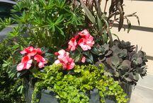 bitki tasarım