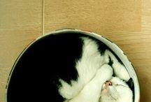 kat zoals ze kunnen slapen / slapende katten