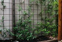 kleine tuinen