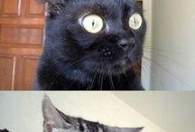 Dyr der er mærkelige