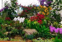 Orquídeas Saiba Como Cuidar e Vender / Saiba tudo sobre Orquídeas