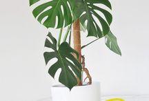 PLANTS | Inspiration
