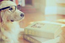 Smart dogs / We know they're all smart.