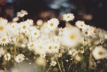 Flowers A Bloom