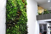 Interior - Green wall