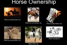 Bästa Hästar