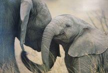 favorite animals / by Deborah Conard Baldwin