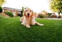 Kunstgras voor huisdieren / Op dit speciale kunstgras voor huisdieren kunnen je beesten zich heerlijk uitleven. En het is ook makkelijk schoon te maken. Vraag direct de scherpste offerte aan bij leverancier kunstgras de Veluwe!