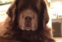 Love my dog  / by Marcy Gross Glick