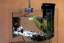 Nano Tanks / Nano tanks, gorgeous aquaria that are as challenging as they are small.