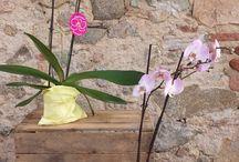 Orquídeas Corma