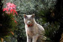 Gelsomino / il mio gatto
