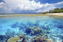Ontdek de Gili Eilanden! / Genieten van de mooiste stranden op de Gili's!