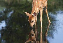 Deer, o Deer / by Sarah Potts