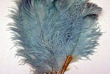 Plumes / Feathers