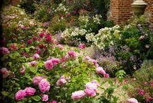 Garden / Inspirasjon til hagen