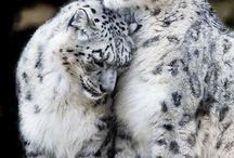 lupo / Τα ζώα μου