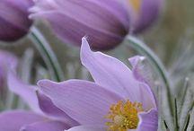 Manitoba wildflowers
