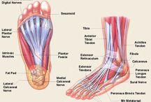 Anatomie Enkel