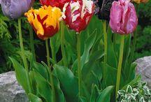 flowers gardenj
