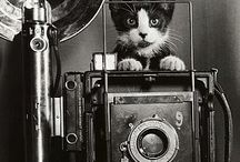 """Cats on Film, Vol. I / """"The playful kitten with its pretty little tigerish gambole is infinitely more amusing than half the people one is obliged to live with in this world."""" Lady Sydney Morgan(1783-1859)"""
